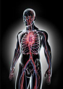 الأوعية الدموية في الجسم